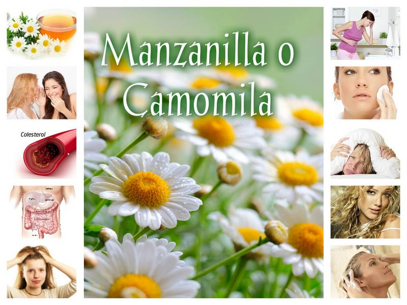 Collage Manzanilla_CSBN
