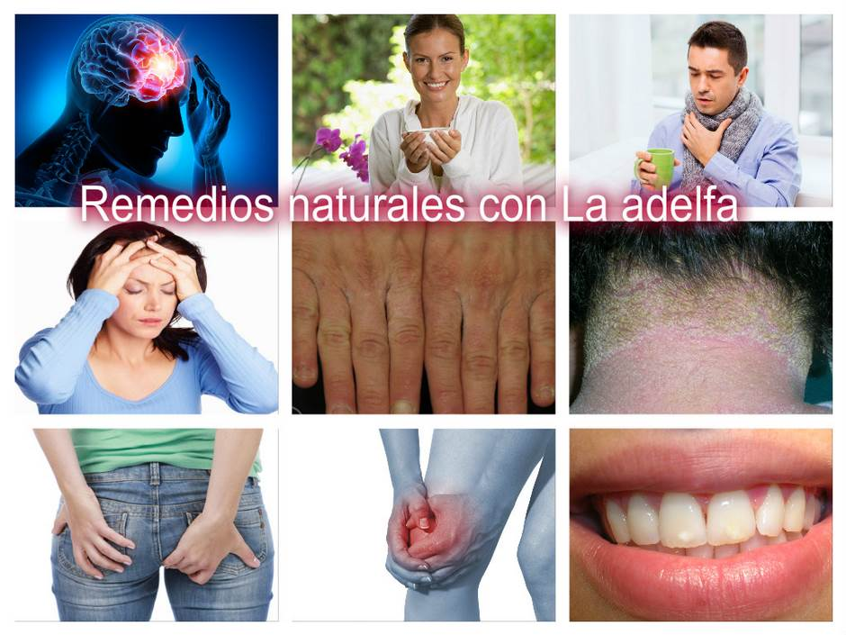 111_Collage_Adelfa (Copiar)